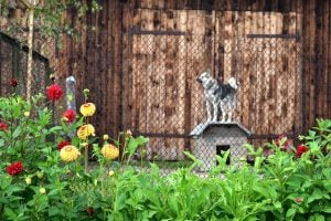 how tall should a dog fence be
