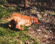 how to bury dog fence wire