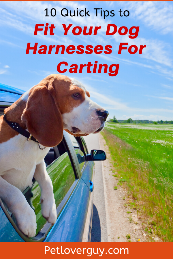 10 Quick Tips to Fit Your Dog Harnesses For Carting