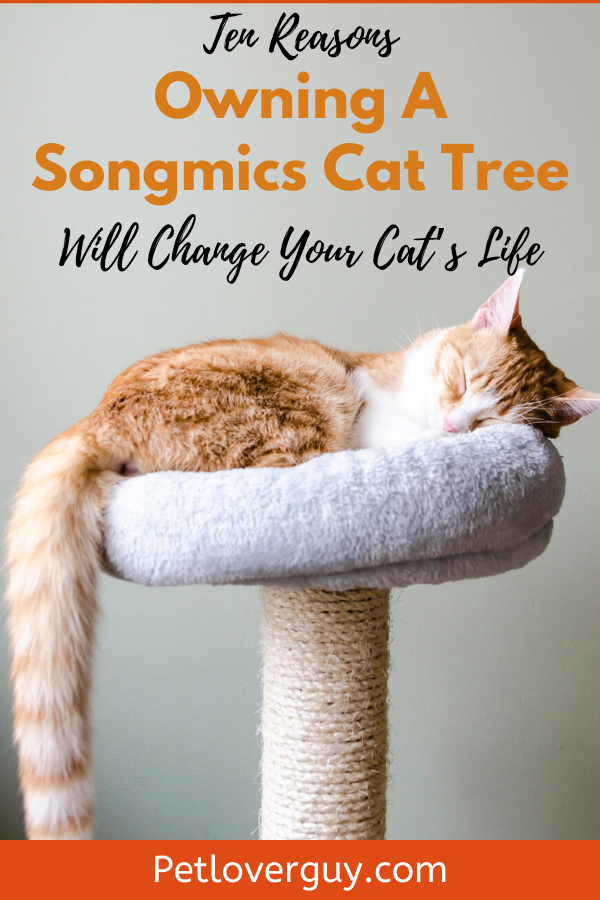 Ten Reasons Owning A Songmics Cat Tree Will Change Your Cat's Life