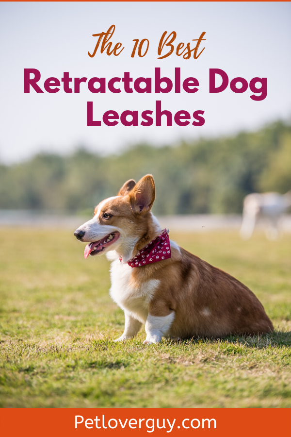 The 10 Best Retractable Dog Leashes