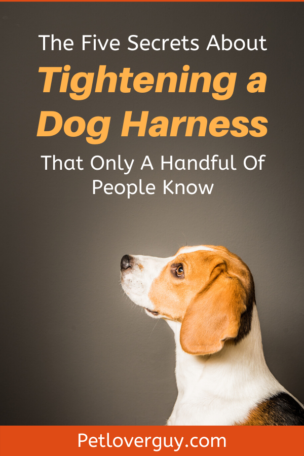 The Five Secrets About Tightening a Dog Harness That Only A Handful Of People Know