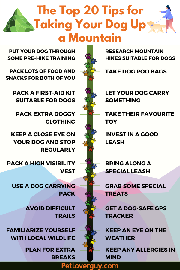 The Top 20 Tips for Taking Your Dog Up a Mountain Infographic