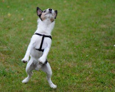 Jump Restraint Dog Harness