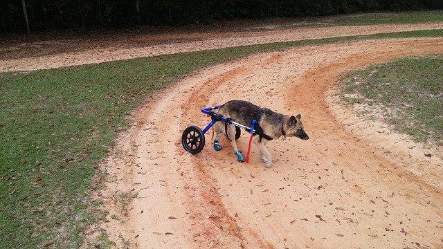 handicap dog harness