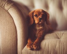 How to Stop the Dog from Chewing on Your Furniture