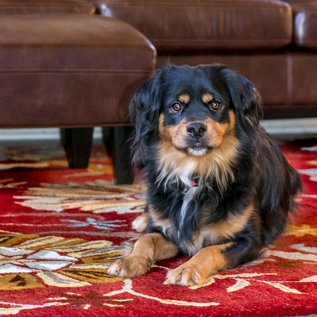 How to Train a Dog on Pee Pads