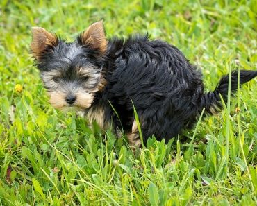 how to help dog poop