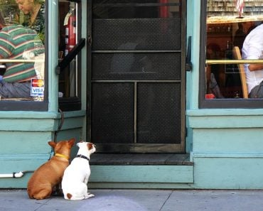 how to stop a dog from scratching door