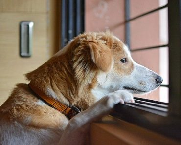 How Long Can a Dog Be Left Alone?