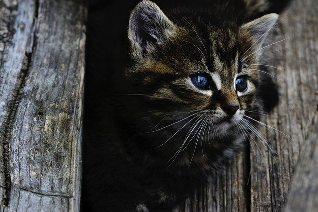 Can Kittens Use Self-Cleaning Litter Boxes?